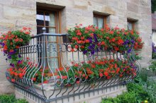 Будь балкон квіти зроблять особливим