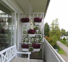 Деякі рослини можна тримати на балконі цілий рік
