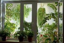 Такий сад вимагає певного мікроклімату
